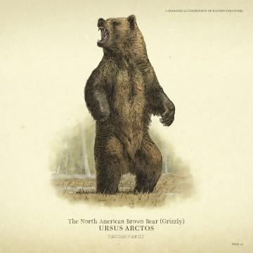 Grizzly Bear North American Brown Bear Red Dead Redemption 2