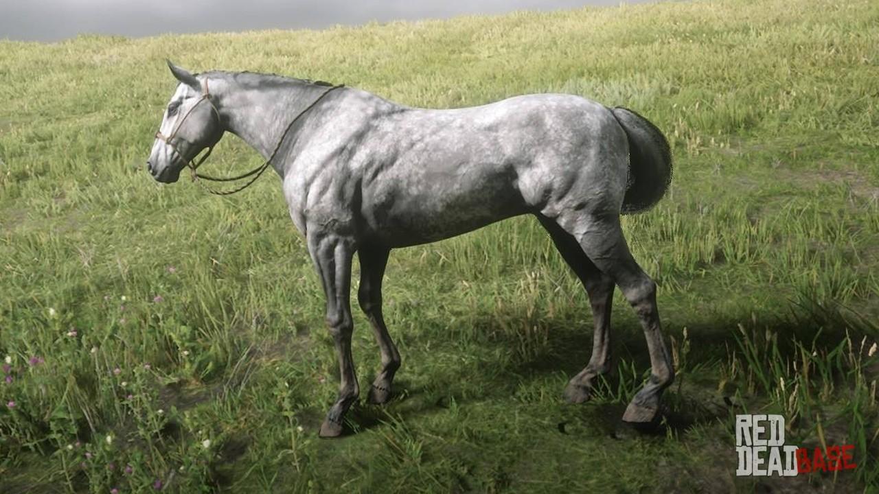 Dapple Grey Thoroughbred Rdr2 Red Dead Online Horses Database Statistics Red Dead Redemption 2