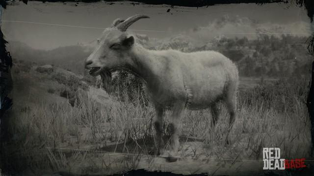 RDR2 Animal AlpineGoat
