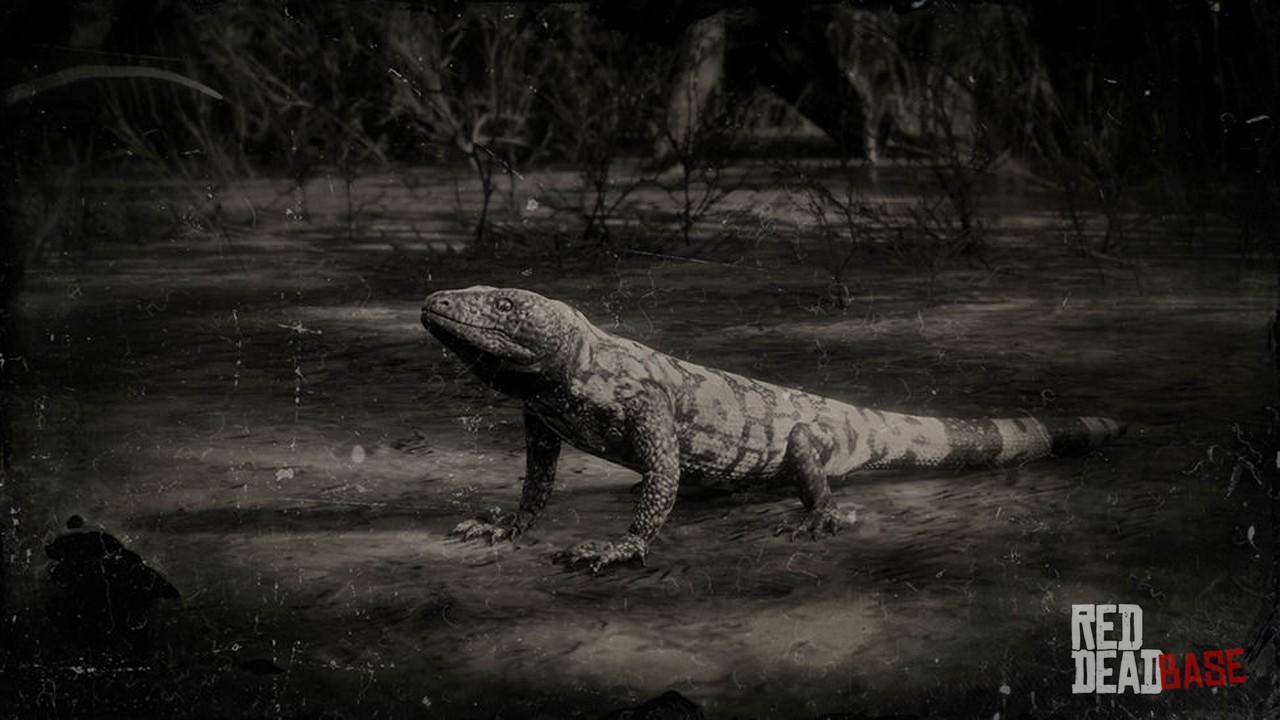 Banded Gila Monster Red Dead Redemption 2 Animals