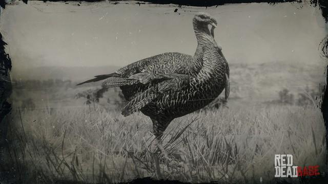 RDR2 Animal EasternWildTurkey