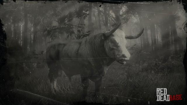 RDR2 Animal HerefordBull