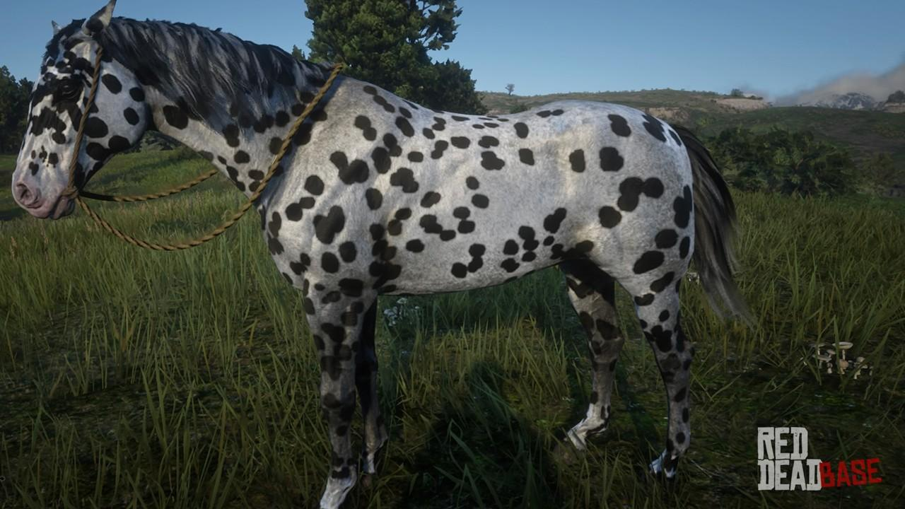 appaloosa red dead redemption 2 horse breeds guide red dead
