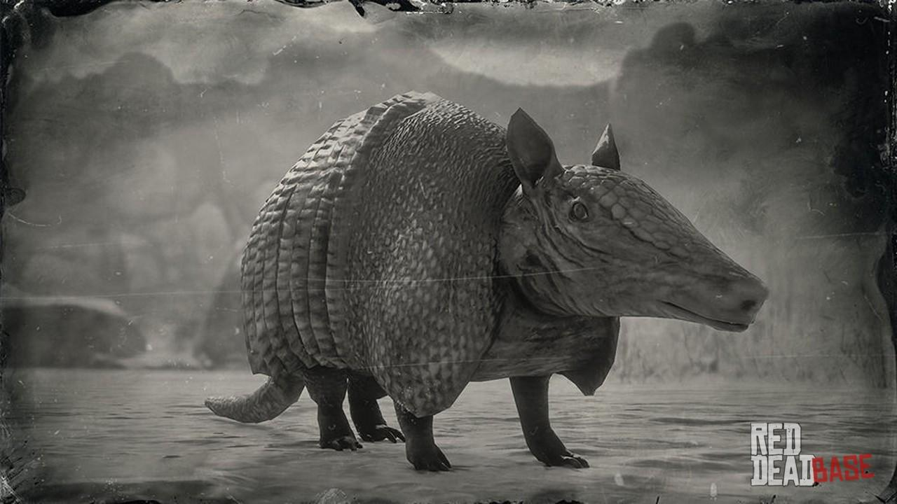 Nine Banded Armadillo Red Dead Redemption 2 Animals