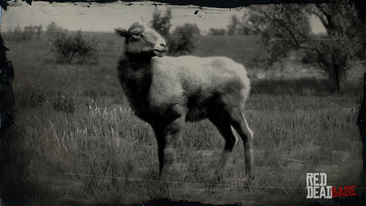 Sierra Nevada Bighorn Sheep Red Dead Redemption 2 Animals Species Wildlife Database Red Dead Redemption 2