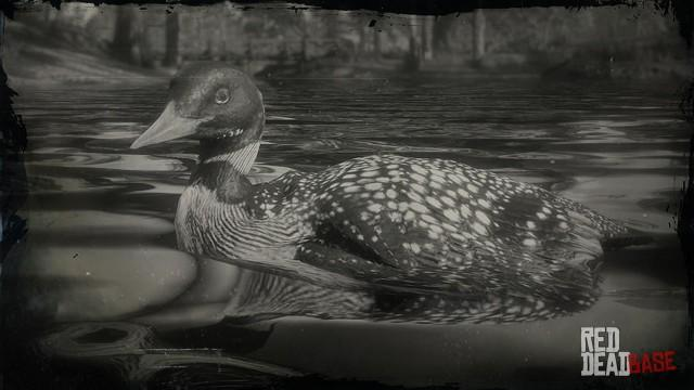 RDR2 Animal YellowBilledLoon