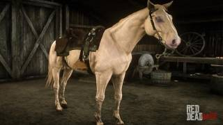 Cremello Gold Dutch Warmblood (Buell)