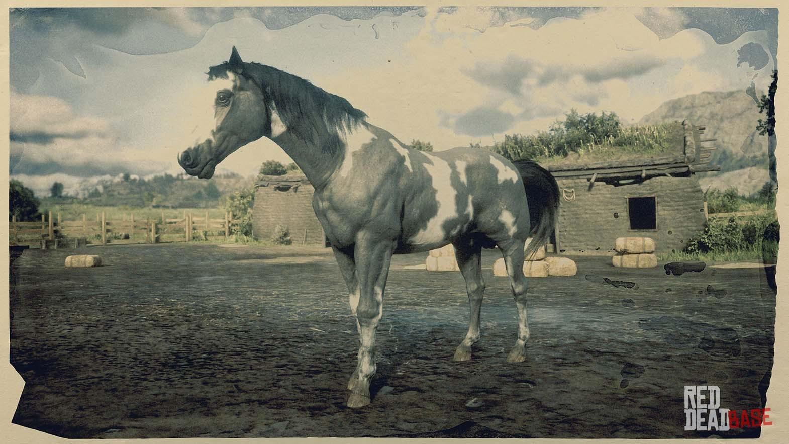 American Paint Horse Red Dead Redemption 2 Horse Breeds Guide Red Dead Redemption 2 Animals Species Wildlife Database Red Dead Redemption 2