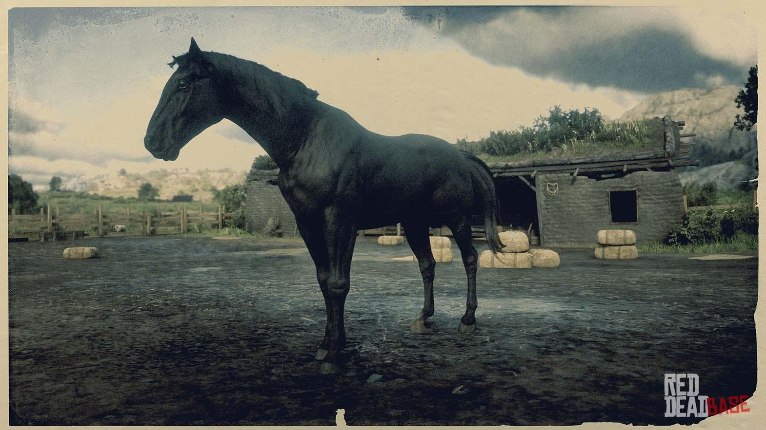 American Standardbred Red Dead Redemption 2 Horse Breeds