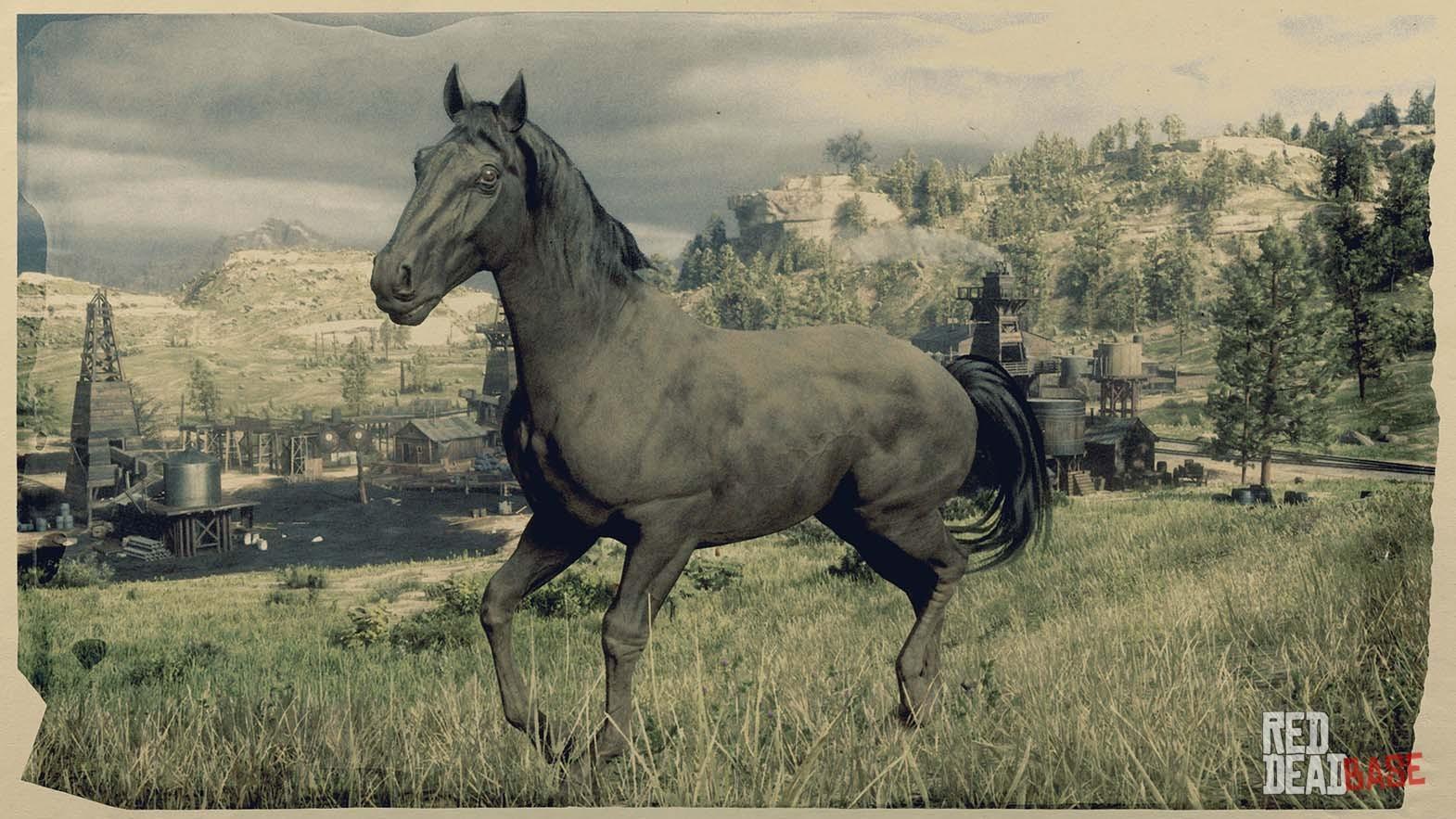 Black American Standardbred - Red Dead Redemption 2 Horses ...