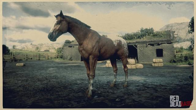 Appaloosa - Red Dead Redemption 2 Horse Breeds Guide - Red Dead