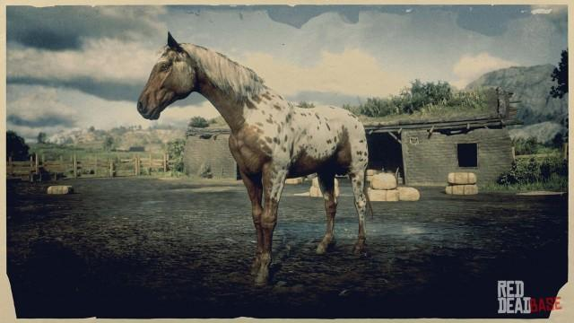Brown Leopard Appaloosa Red Dead Redemption 2 Horses