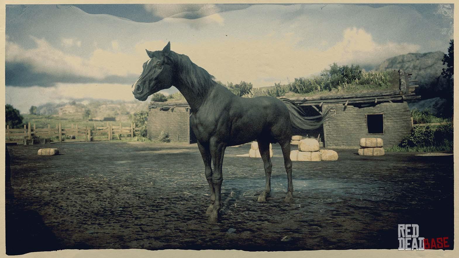 Black Arabian Horse Rdr2 Red Dead Online Horses Database Statistics Red Dead Redemption 2