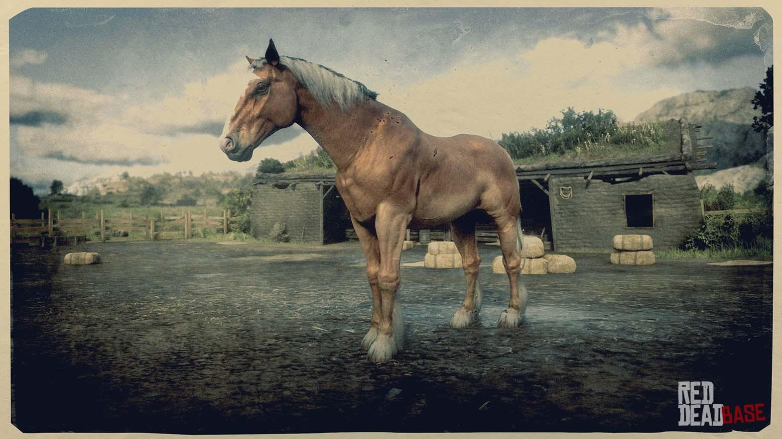 Belgian Draft Horse Red Dead Redemption 2 Horse Breeds Guide Red Dead Redemption 2 Animals Species Wildlife Database Red Dead Redemption 2