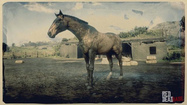 Sooty Buckskin Dutch Warmblood