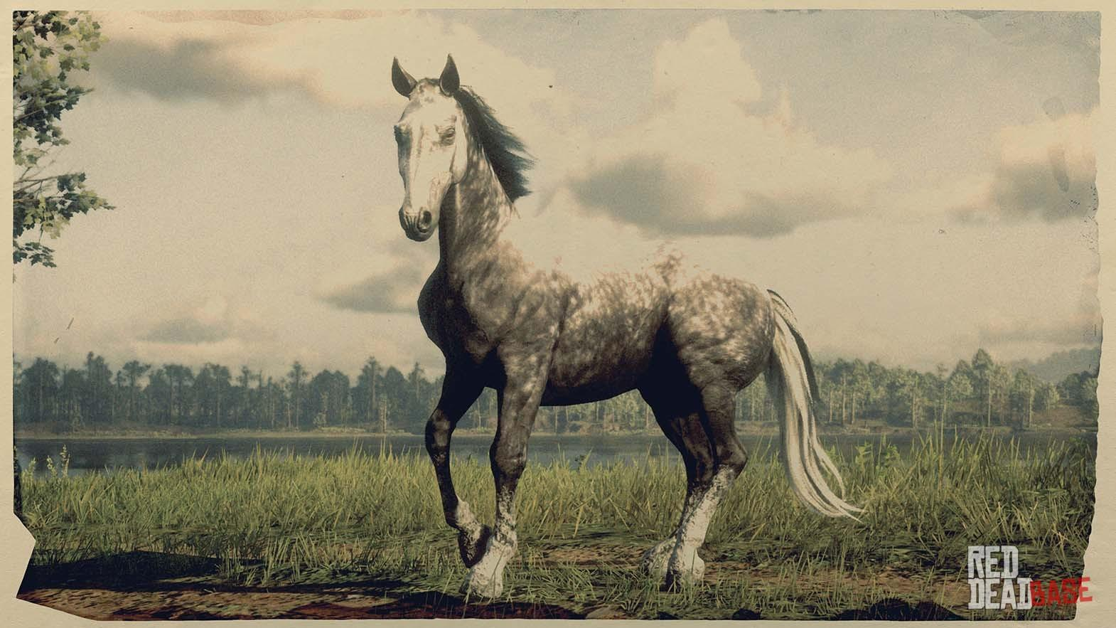 Hungarian Halfbred Red Dead Redemption 2 Horse Breeds