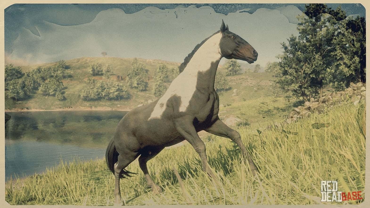 Hungarian Halfbred Red Dead Redemption 2 Horse Breeds Guide Red Dead Redemption 2 Animals Species Wildlife Database Red Dead Redemption 2