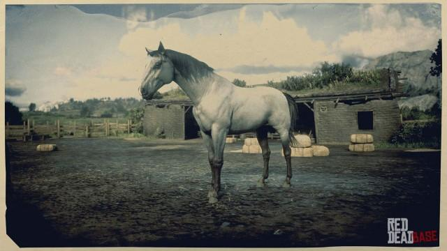 Grey Kentucky Saddler