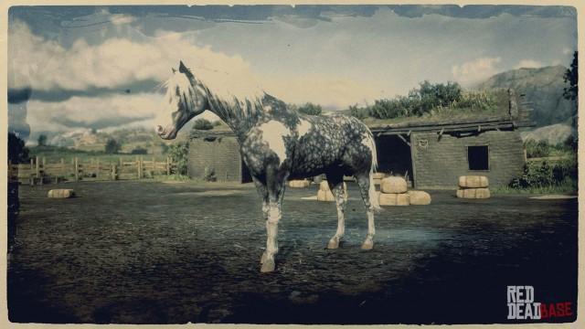 Missouri Fox Trotter Red Dead Redemption 2 Horse Breeds