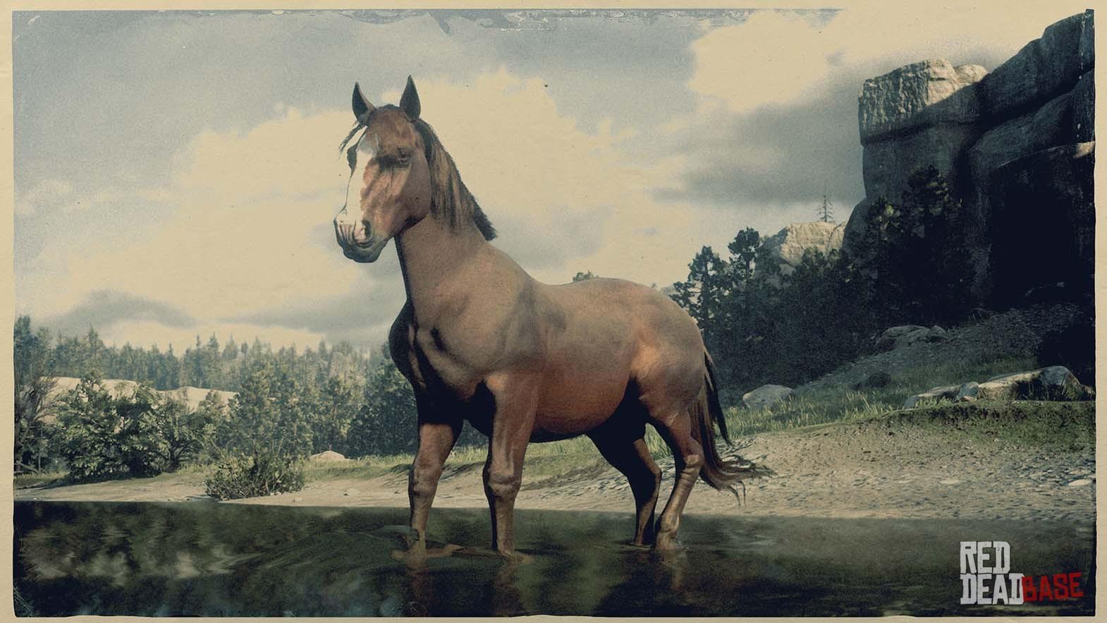 Suffolk Punch Horse Red Dead Redemption 2 Horse Breeds Guide Red Dead Redemption 2 Animals Species Wildlife Database Red Dead Redemption 2