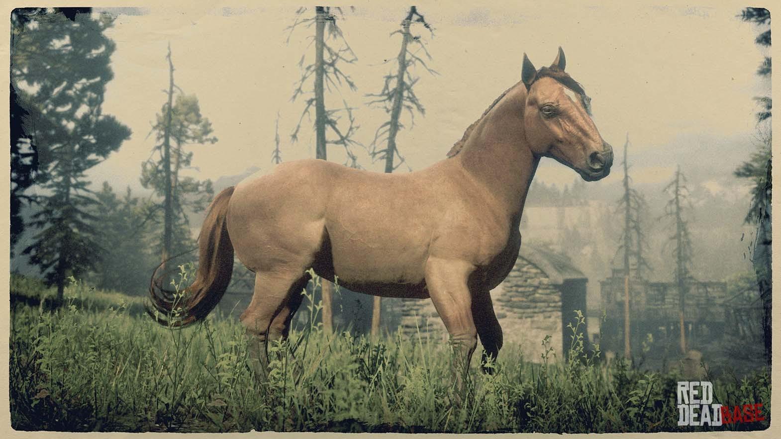 Arabian Horse Images Sorrel Suffolk Punch H...