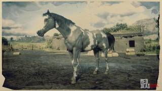Grey Overo American Paint Horse