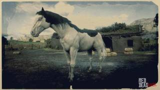 Splashed White American Paint Horse