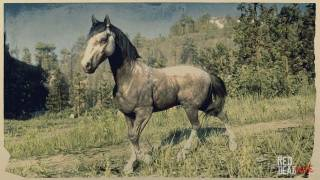 Rose Grey Andalusian Horse