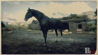 Black Kentucky Saddler