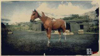 Chestnut Pinto Kentucky Saddler