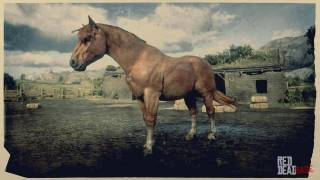Red Dead Redemption 2 Horse Breeds Guide: Details on all 19 Horse