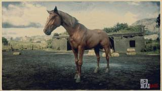 Chestnut Tennessee Walker