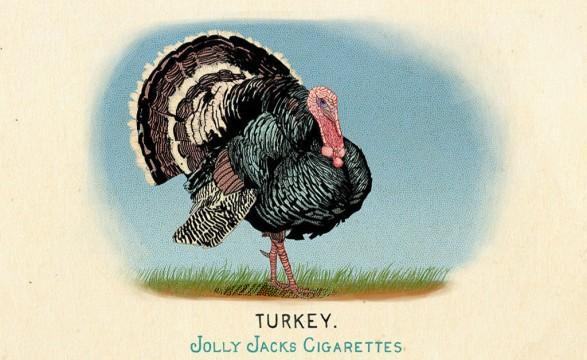 RDR2 CigaretteCards Animals 12 Turkey