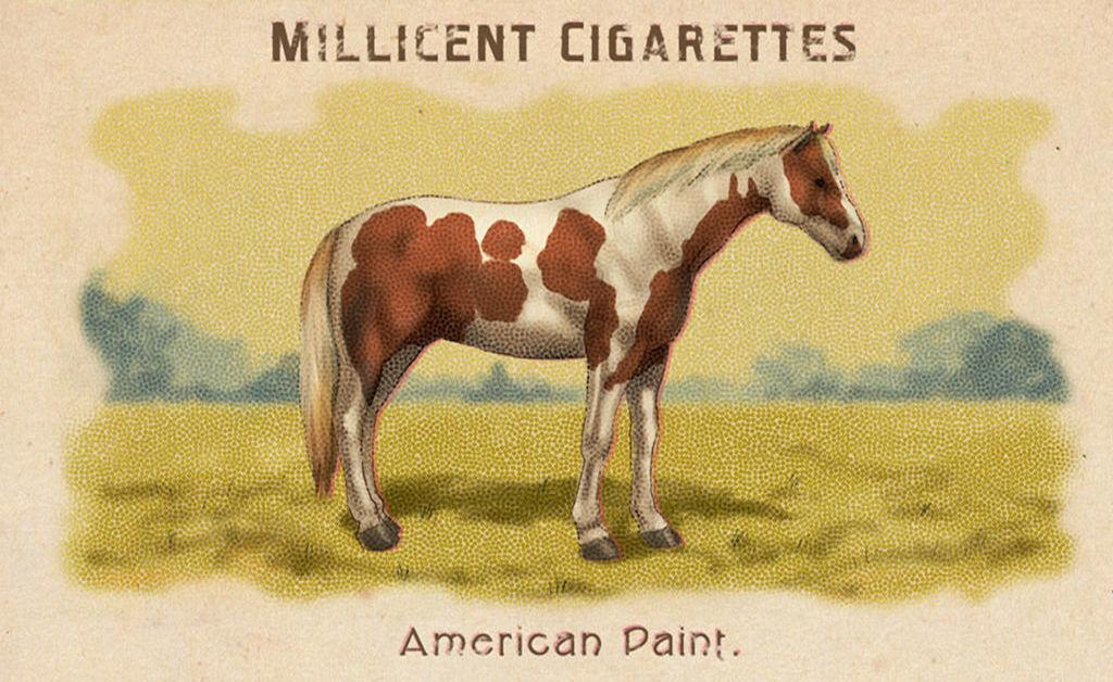 Tobiano American Paint Horse Rdr2 Red Dead Online Horses Database Statistics Red Dead Redemption 2
