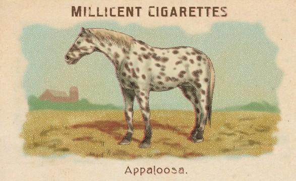 RDR2 CigaretteCards Horses Appaloosa