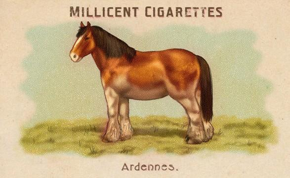 RDR2 CigaretteCards Horses Ardennes
