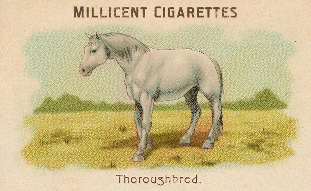 RDR2 CigaretteCards Horses Thoroughbred