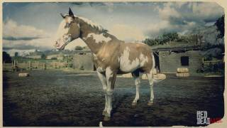 Overo American Paint Horse
