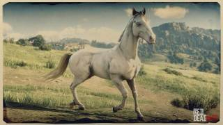 Perlino Andalusian Horse
