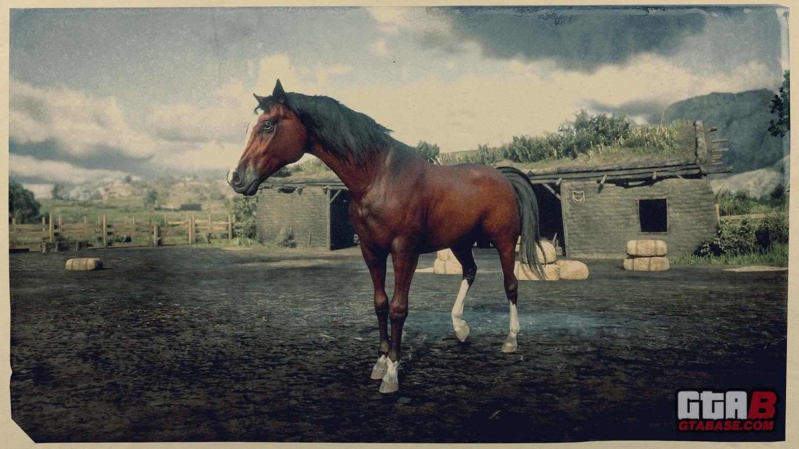 Red Chestnut Arabian Horse Rdr2 Red Dead Online Horses Database Statistics Red Dead Redemption 2