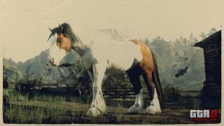 Splashed Bay Gypsy Cob