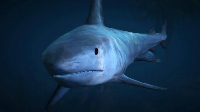 Tiger Shark - GTA V Animals & Wildlife Database - Grand Theft Auto V
