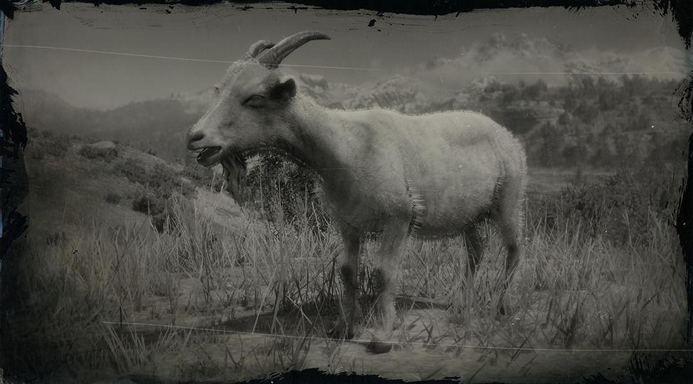Alpine Goat - Red Dead Redemption 2 Animals Species & Wildlife - Red