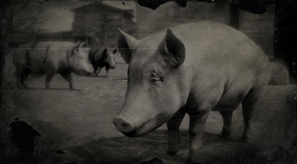 Berkshire Pig - Red Dead Redemption 2 Animals Species