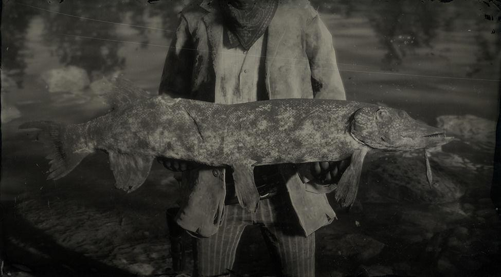ae179f25fbb9f Red Dead Redemption 2 Animals Species   Wildlife. Legendary Northern Pike