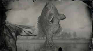 Legendary Bluegill