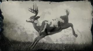 Legendary Buck