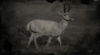 Legendary Pronghorn
