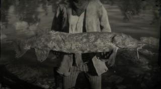 Legendary Northern Pike