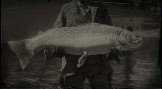 Legendary Steelhead Trout